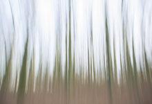 Skovens træer - i kreativ version